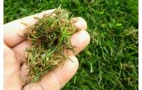 iVrtlar: Prozračivanje travnjaka